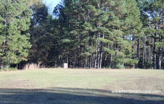 SOLD: Six Acres of Piney Woods for Your Texas Homestead