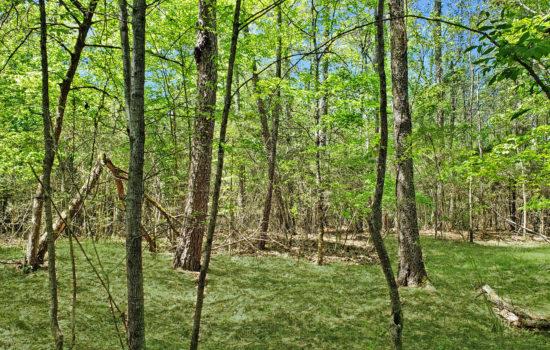 8.4 Acres Deep in the Piney Woods